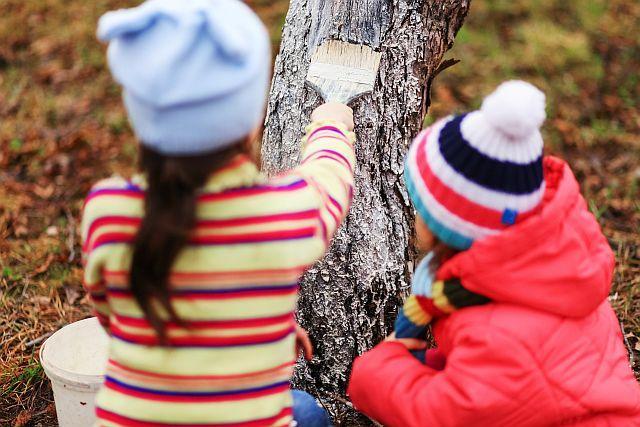 Bielenie drzew