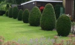 Formowanie krzewów i drzew. Poznaj zasady formowania roślin