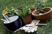 Sadzenie kwiatów doniczkowych, nawożenie i pielęgnacja.